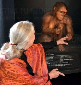 """Momento especialmente emotivo. Jane Goodall se arrodilla para saludar a una reproducción de un """"homo habilis"""" similar a los que se han encontrado en la garganta de Olduvai en Tanzania, donde Goodall comenzó sus estudios científicos   Foto Activatuneurona"""