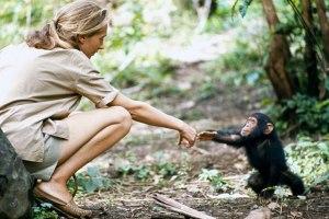 Histórica fotografía de Jane Goodall.