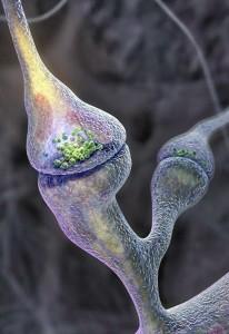 sinapsis-206x300