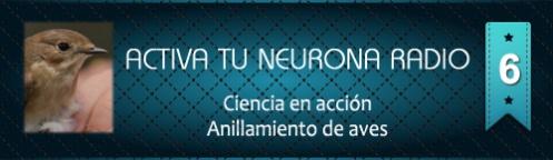 Activa Tu Neurona Radio ® Nº6 Ciencia en acción. Anillamiento de aves
