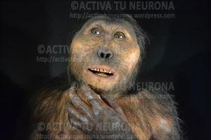 Paranthropus Boisei Credit: Sculpture Atelier Daynes/ ACTIVA TU NEURONA