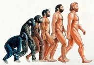Típica representación de la evolución humana. Credit: http://hominizate.wordpress.com/