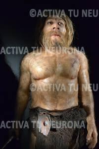 Neandertal del Museo de la Evolución Humana de Burgos. Foto: Izaskun Lekuona
